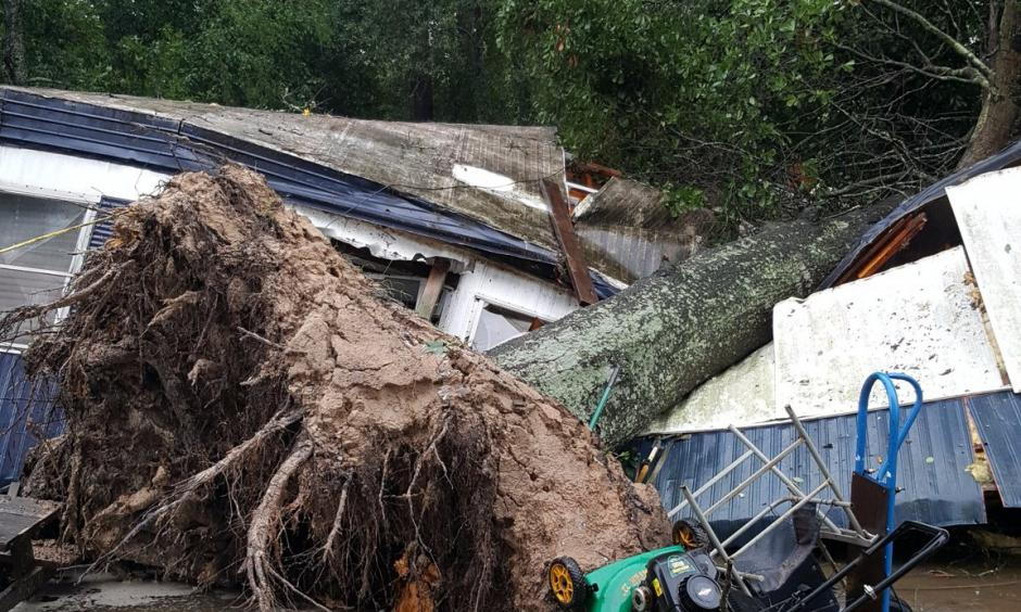The sheriff's office confirmed Monday afternoon  a 60-year-old woman was killed  when a tree fell on her home as she slept. Photo: MCSO