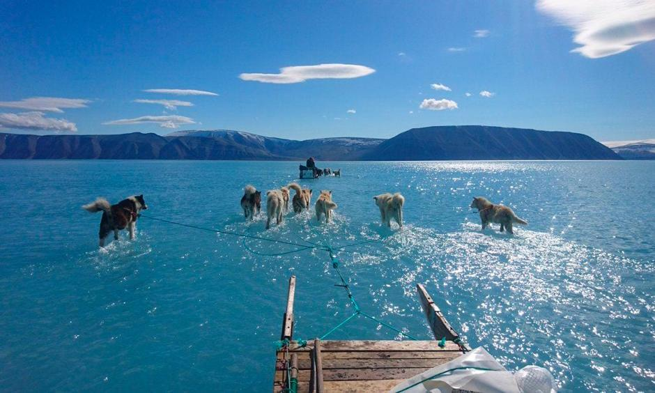 Steffen Olsen, an Arctic researcher with the Danish Meteorological Institute, and dogs set out to retrieve oceanographic moorings and a weather station over meltwater topping sea ice in northwest Greenland on Thursday. Photo: Steffen Olsen