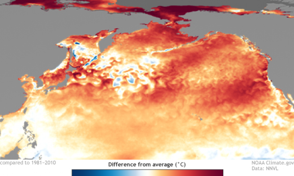Sea surface temperature anomalies during September 2019. Climate.gov image based on NOAA NNVL and NCEI.