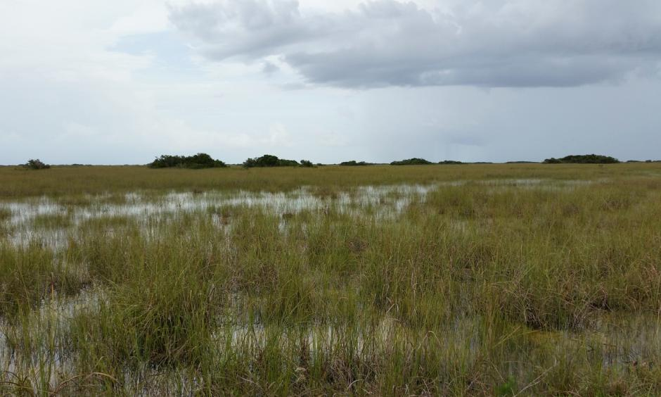A view from the Shark Valley Visitors Center in Everglades National Park. Much of the fresh water that used to replenish South Florida's saw grass prairie has been diverted to agriculture, researchers say. Photo: Pietro Valocchi, Flickr
