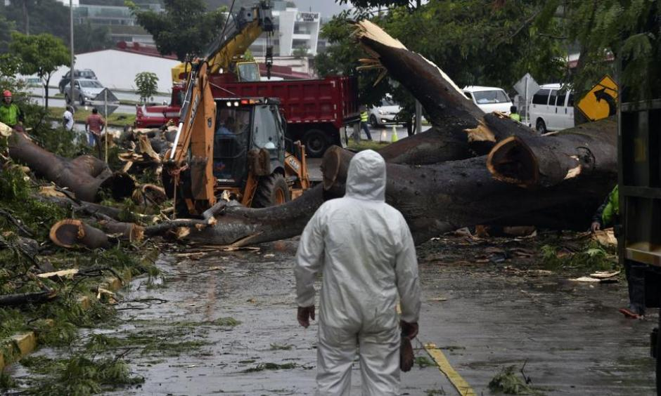 Workers cut a tree that killed a boy when it fell during a storm caused by Tropical Storm Otto in Panama City, Panama on November 22, 2016. Photo: Rodrigo Arangua, AFP, Getty Images