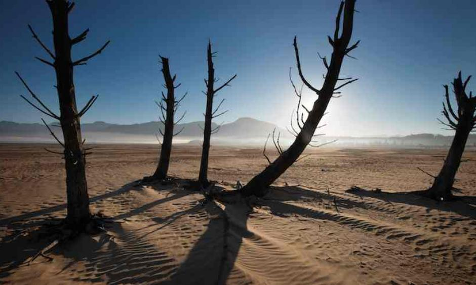 Bare sand and dried tree trunks stand out on May 10, 2017, at Theewaterskloof Dam, near Villiersdorp, about 40 miles east of Cape Town, South Africa. The dam had less than 20% of its water capacity at that point, and water levels are now even lower. Photo: Rodger Bosch/AFP/Getty Images