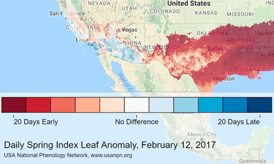 An index of the seasonal progress of leafy plants shows conditions 20 days or more ahead of schedule over large parts of the South and Southwest as of Sunday, February 12. Image: USA National Phenology Network via @TheresaCrimmins