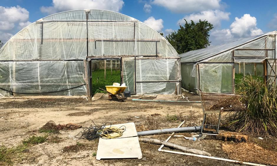 Water spinach farmers in Rosharon, Texas, are worried about the fallen beams and torn plastic sheeting for their greenhouses as winter approaches. Photo: Hansi Lo Wang, NPR