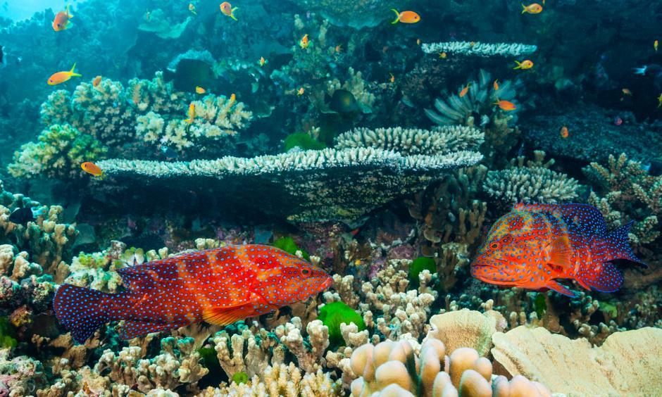 A Great Barrier Reef study found 112 'robust source reefs' that could help repair damage from bleaching. Photo: Daniela Dirscherl, Getty Images/WaterFrame RM