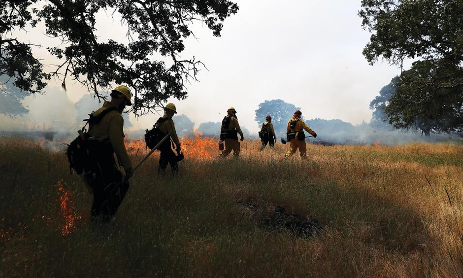 A prescribed burn at California's Bouverie Preserve last spring cleared tall grasses and downed limbs from around the giant old oak trees. Photo: Justin Sullivan, Getty Images