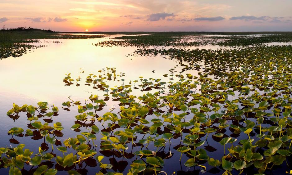 The Everglades wilderness has already been reduced by half by the construction of dams and canals and to accommodate a booming population. Photo: Getty Images