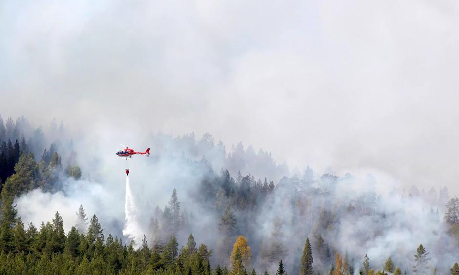 Firefighters battle a blaze in a forest in western Sweden, the worst-hit country. Photo: Mats Andersson, EPA