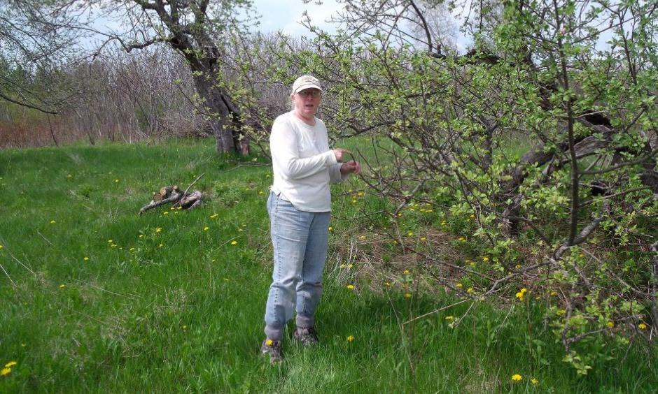 """Betsy Garrold lives on 50 acres in Waldo County, Maine, where the Lyme incidence rate is three times the state average. Her 100-year-old apple orchard is what she calls """"a stomping ground for blacklegged ticks."""" Photo: Kristen Lombardi, Center for Public Integrity"""