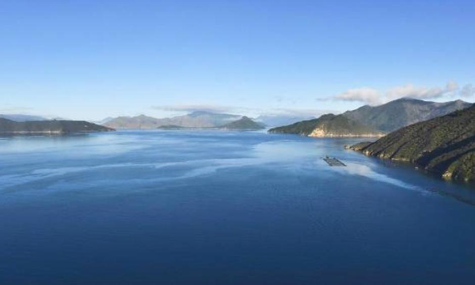 A salmon farm in the Pelorus Sound. Greater acidity could stunt the growth of finfish larvae. Photo: Stuff