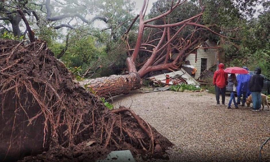A large stone pine tree thought to be 100-years-old crashed into a home on Saturday, February 2, 2019, in Santa Barbara, California, during a powerful winter storm. Officials said no one was injured. Photo: Santa Barbara County Fire Department