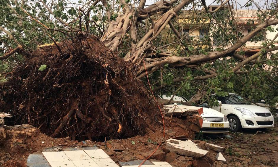 Cars are damaged by an uprooted tree in a residential area following Cyclone Fani in Bhubaneswar, capital of the eastern state of Odisha, India, May 4, 2019. Photo: Jatindra Dash, Reuters