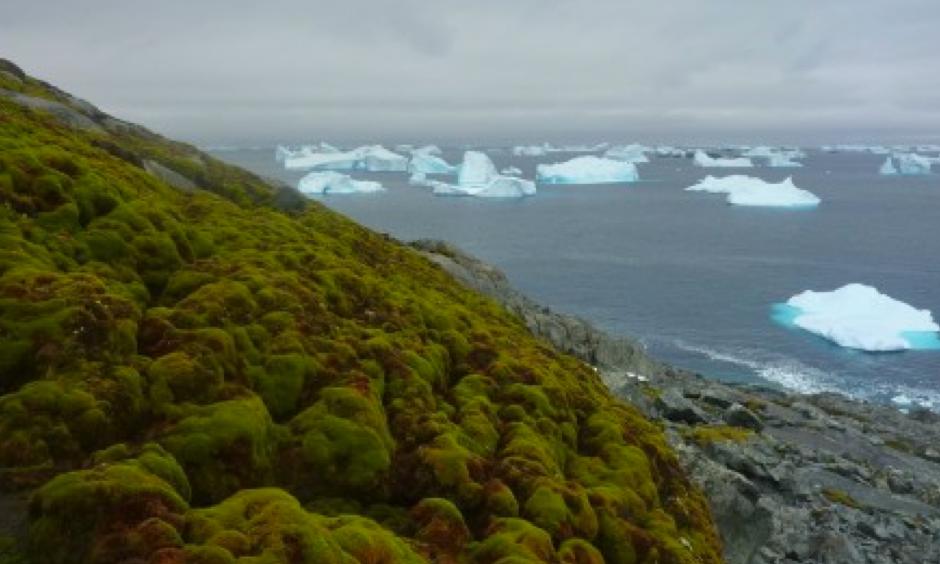 Moss on Green Island. Photo: Matt Amesbury