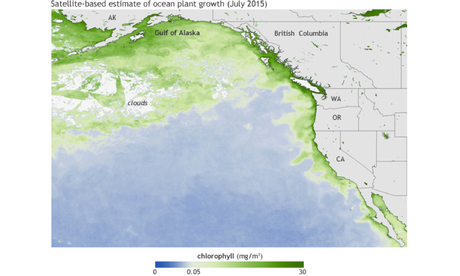 Average chlorophyll concentrations (milligrams per cubic meter of water) in July 2015. The darkest green areas have the highest surface chlorophyll concentrations and the largest amounts of phytoplankton—including both toxic and harmless species. Image: NOAA Climate.gov map based on Suomi NPP satellite data provided by NOAA View
