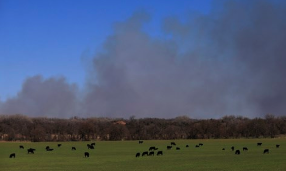 Cattle graze with a background of smoke from wildfires near Hutchinson, Kan., Tuesday, March 7, 2017. Fires raged in parts of Kansas, Oklahoma, Texas and Colorado, and warnings that conditions were ripe were issued for Iowa, Missouri and Nebraska. The fire warning came after powerful thunderstorms moved through the middle of the country overnight, spawning dozens of suspected tornadoes, according to the National Weather Service. Photo: Orlin Wagner, The Associated Press