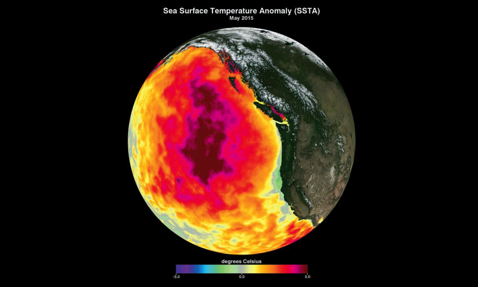 """This map shows anomalously high sea-surface temperatures in the Pacific Ocean in May 2015 as compared to the 2002–2012 average. The recent warm-water phenomenon is known as """"the Blob."""" Image: American Geophysical Union"""