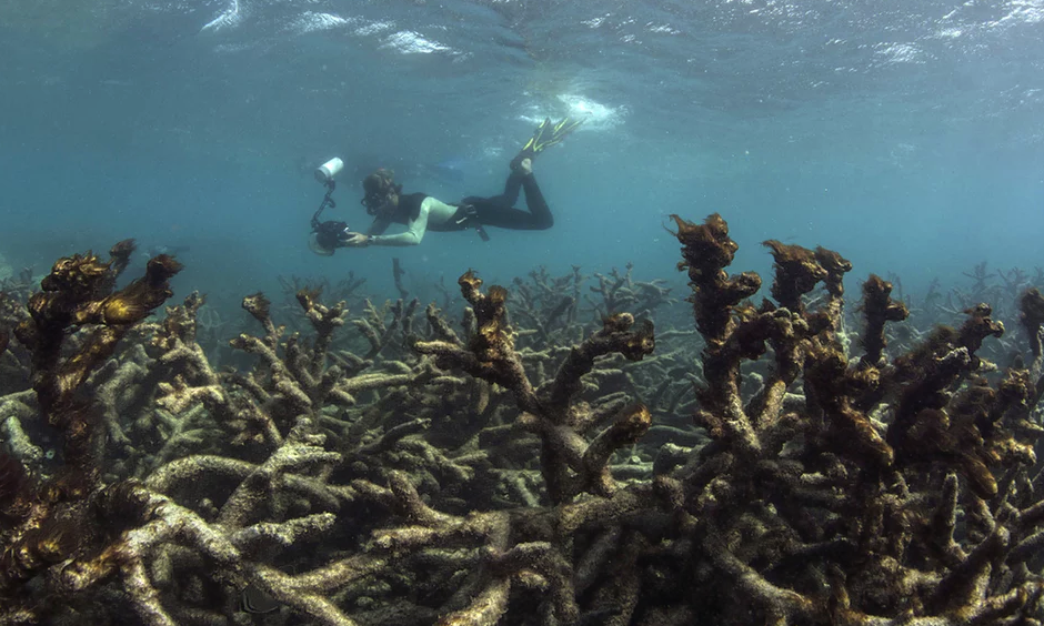 Initial estimates show that 22% of the coral along the whole Great Barrier Reef was killed in the bleaching event. Photo: Xl Catlin Seaview Survey/EPA