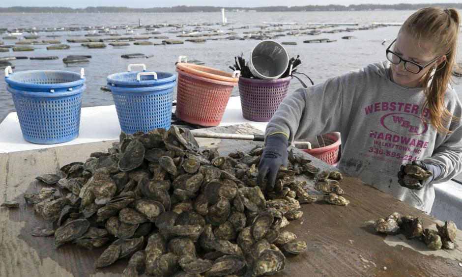 The Morris Family Shellfish Farm in Sea Level, NC suffered extensive damaged to their hatchery and mature oysters during Hurricane Florence.  Photo: Robert Willett