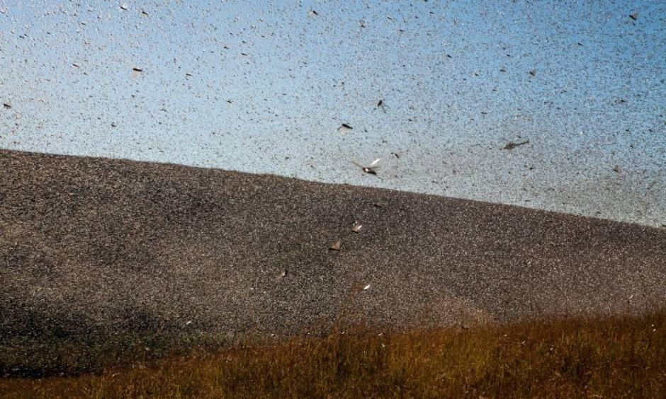 Climate change is fueling the East African locust crisis