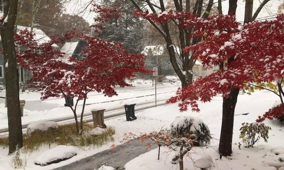 "Madison, Wisconsin, lies buried under 5"" of snow on Friday, November 1, following a 5.1"" accumulation on October 31. Credit: Courtesy Madison"
