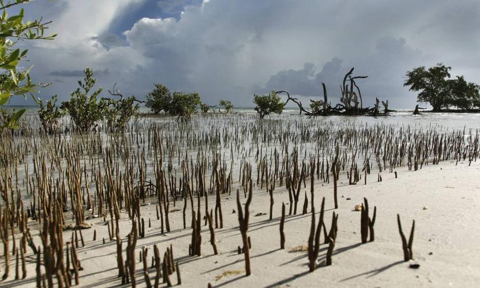 NASA scientists have started using satellite data and 3D imaging to map dwindling mangrove forests in South Florida and track how they recover from hurricanes as threats from climate change and urban development increase. Credit: Valerie Preziosi