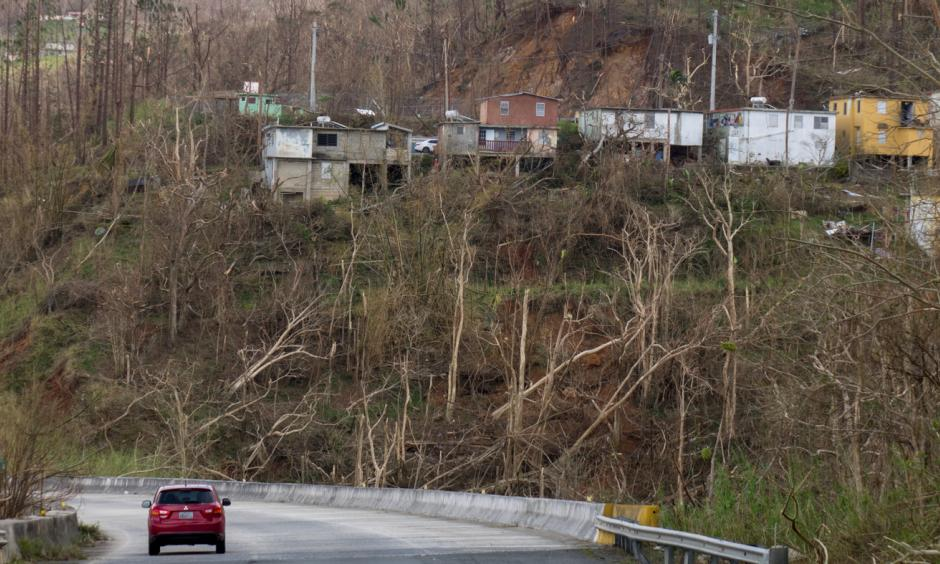 Trees and vegetation near Cayey were knocked down by the winds packed by Hurricane Maria. Photo: Angel Valentin, NPR