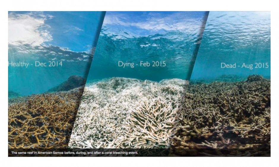 The same reef in American Samoa before, during and after a coral bleaching event. Image: XL Catlan Seaview Survey