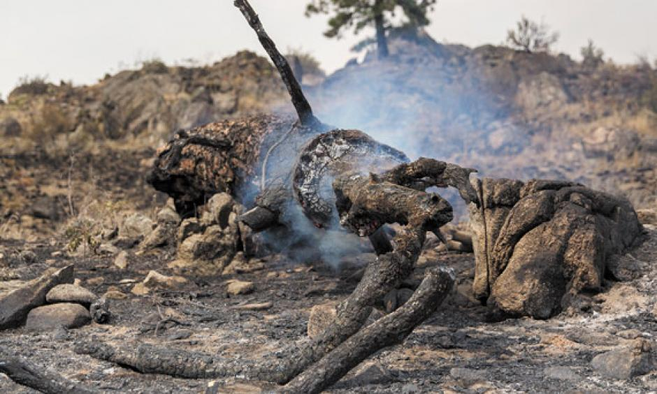 As of August 31, the Okanogan Complex has burned more than 300,000 acres. Photo: Alex Garland