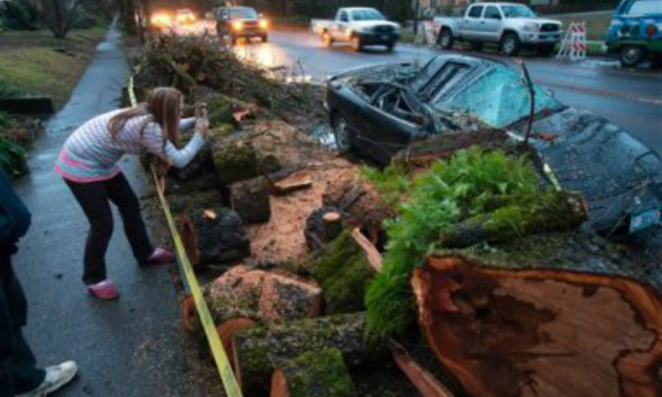 Natasha Jackson snaps a photo of the remains of a vehicle crushed by a bigleaf maple tree along W. 11th Ave. in Eugene, Ore., Thursday, Dec. 10, 2015. An overnight storm brought rain and strong winds to the southern Willamette Valley. Photo: Brian Davies, The Register-Guard, AP
