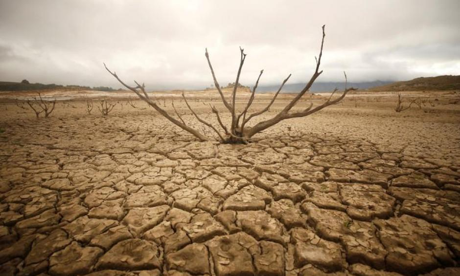 Dried out branches are seem amongst caked mud at Theewaterskloof dam near Cape Town, South Africa, January 20, 2018. Photo: Mike Hutchings, Reuters