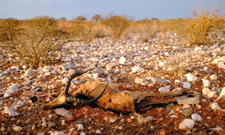 Ongoing drought in South Africa threatens wildlife.