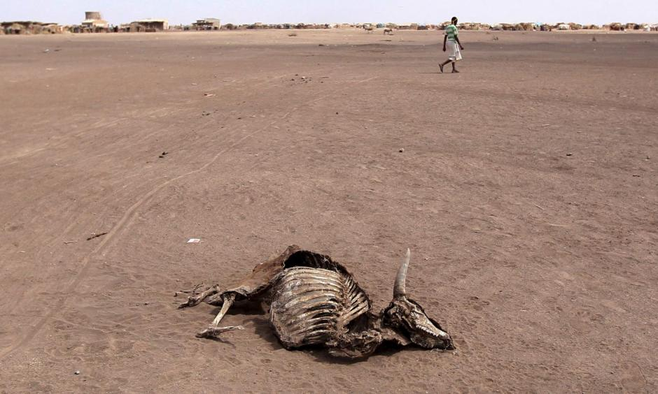 Drought is ravaging Ethiopia's Somali region. Photo: Tiksa Negeri, Reuters
