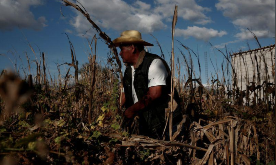 Climate change is exacerbating drought which can harm crops