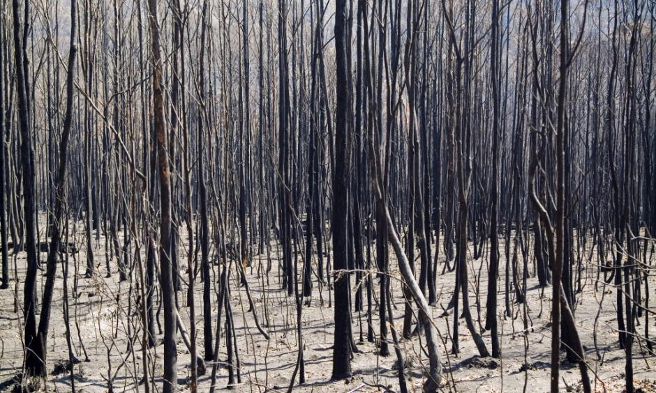 Tasmania has for the past two weeks experienced multiple wildfires that have threatened even UNESCO World Heritage protected forests. Photo: Shutteshock