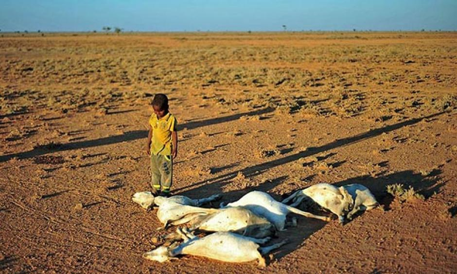 A boy looks at dead goats in a dry land close to Dhahar in Puntland, northeastern Somalia, on December 15, 2016. Drought in the region has severely affected livestock for local herdsmen. Photo: Abdi Waham, AFP, Getty Images