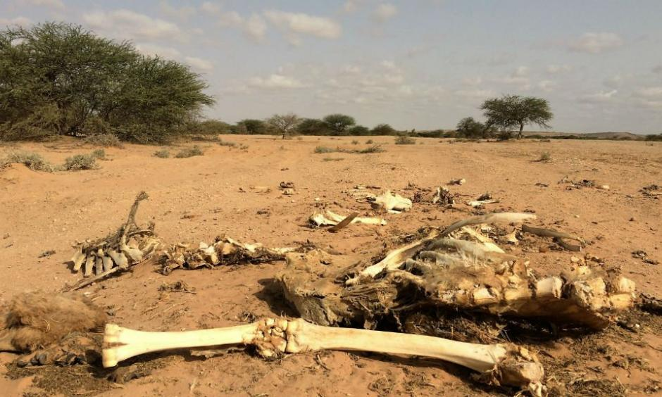 The carcass of a camel in Somaliland where the drought has killed 80 percent of the livestock. Photo: France 24