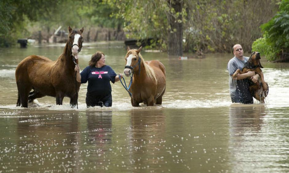 Rhonda Burnett rescues her horses from her home on Citation Drive in Garfield, Texas, while Lee Hays helps a neighbor's dog on Saturday. Dozens of homes on the street, on the banks of the Colorado River, were flooded.   (Jay Janner / Austin American-Statesman)