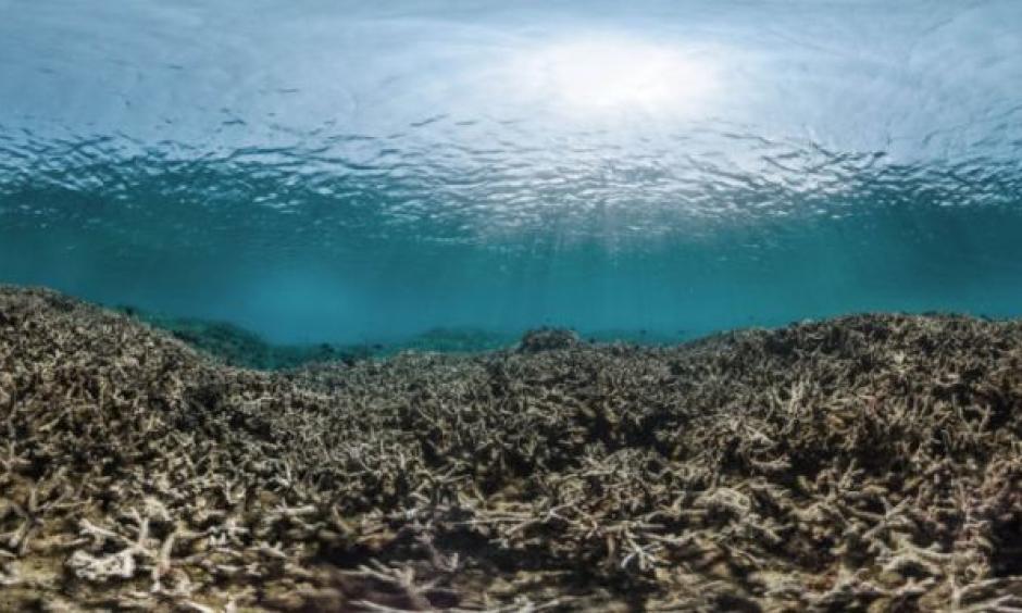 Photo: XL Catlin Seaview Survey