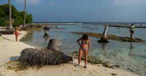 Tourists among palm trees that were uprooted by erosion on what is known as a bikini beach, on the inhabited island of Guraidhoo in the Maldives. Guesthouses were only recently allowed on the islands. Photo: Adam Dean for The New York Times
