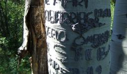 A Basque arborglyph found outside Boise, Idaho. Researchers are cataloging this record of American immigrant experience, etched into trees by sheep herders from the 1890s through the 1980s, but it's a race against the clock. Photo: Boise State University Arborglyph Database