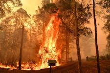 Fire burns a fence in Werombi, 30 miles southwest of Sydney. Credit: Mick Tsikas/EPA-EFE/REX/Shutterstock