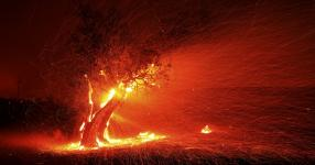 climate change driven wildfire