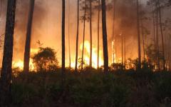 The West Mims Fire reportedly started after a lightning strike on April 15 and spread through Georgia's Okeefenokee Wildlife Reserve, covering more than 21,000 acres by April 17. Photo: USFWS and Georgia Forestry Commission, Twitter