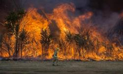 A firefighter walks past a back-burn as flames leap along the American River Parkway near Cal Expo in Sacramento, Calif. Experts say climate change is making fire seasons longer and harsher. Photo: Hector Amezcua