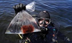 In this June 15, 2017, photo, research technician Kristen Mello shows a sample of a red shrub-like seaweed collected in the waters off Appledore Island, Maine. Kelp forests are critical to the fishing industry but are disappearing around the world. The Gulf of Maine is the latest global hotspot to lose kelp. Scientists say the likely culprits are climate change and invasive species. Photo: Charles Krupa, AP