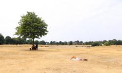 A woman sunbathes on the burnt dry grass on Wimbledon Common in London, caused by a prolonged summer heatwave, July 2918. Photo: Amer Ghazzal, REX/Shutterstock
