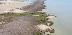 Views of mangrove shorelines impacted by dieback event in late 2015, east of Limmen Bight River, Northern Territory. Photo: NC Duke, June 2016