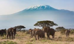 Mount Kilimanjaro - a natural wonder at risk from climate change as its glaciers shrink. Photo: khanbm52, Getty Images/iStockphoto