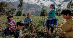 A family harvesting flowers in the foothills of the Cordillera Blanca in Peru. Photo: Tomas Munita for The New York Times