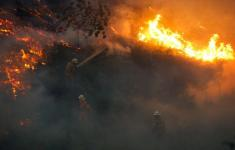 Firefighters work to put out a forest fire near the village of Fato, central Portugal, June 18, 2017. Photo: Rafael Marchante, Reuters